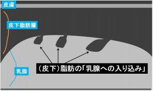 正常乳腺(詳説)